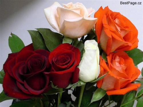 obrázky ke stažení k narozeninám Květiny a kytičky online,k narozeninám,ke stažení,na profil obrázky ke stažení k narozeninám